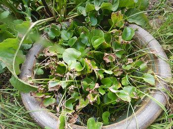 DSCN0222-庭の鉢.jpg