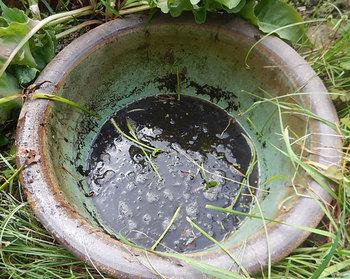 DSCN0223 鉢の中.jpg