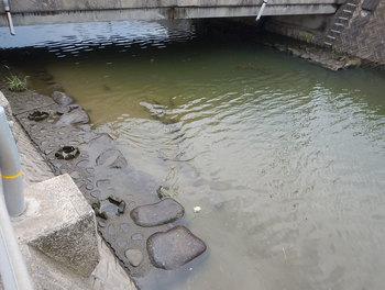 DSCN3496 水位下がった川.jpg