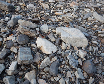 DSCN4063 河原の石.jpg