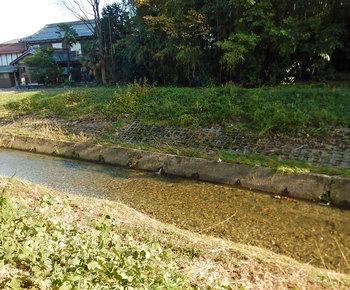 DSCN4181 矢守川.jpg