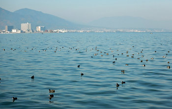 DSCN4286 湖都の鳥たち.jpg