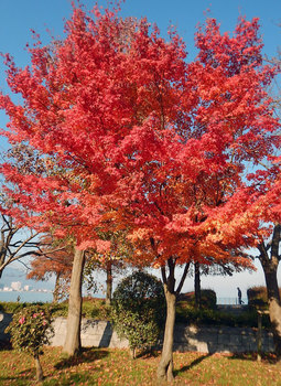 DSCN4288 湖岸の紅葉.jpg