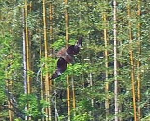 DSCN5999 猛禽類.jpg