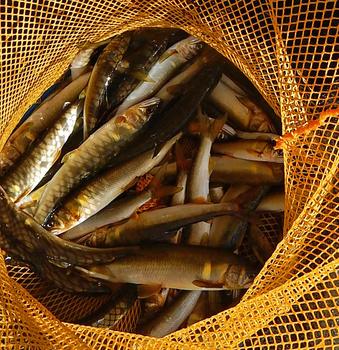 DSCN6619 捕れた魚.jpg