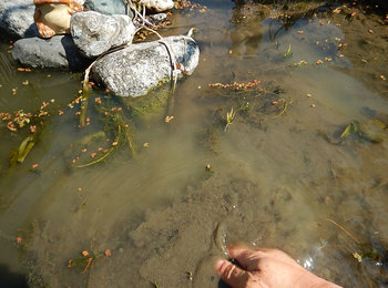DSCN9976 泥がたまった池.jpg