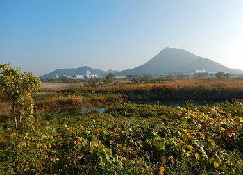 DSCN9992 晩秋の野洲川.jpg