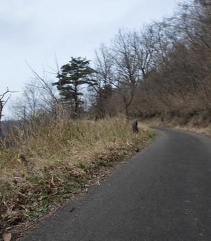 DSC_0232 登山道.jpg
