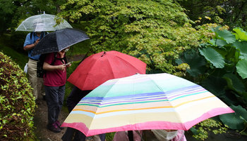 DSC_0355 傘の花咲く.jpg