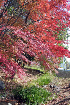 DSC_7523 紅葉と水路.jpg