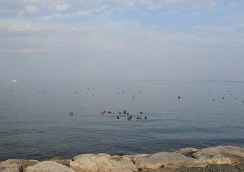 DSC_7712 24日湖岸.jpg