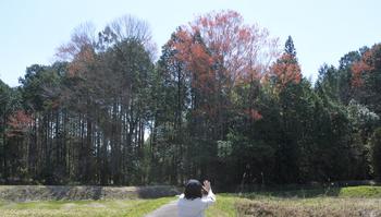 DSC_8464 ハナノキの群落.jpg