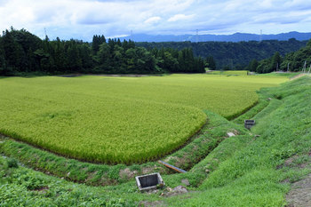DSC_8542 田.jpg