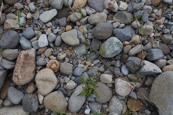DSC_8567 河原の石.jpg