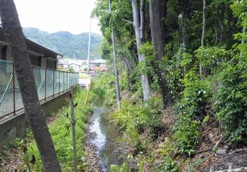 DSC_9088 森のまわりの湿地.jpg