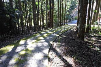 DSC_9517 午後の木陰.jpg