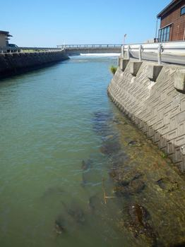 コイと河口.jpg