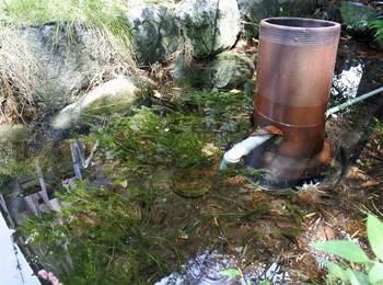 奥のほうの池.jpg