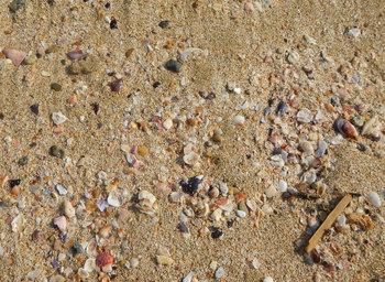 外海の貝.jpg