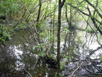 山の中の池の途中.jpg