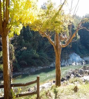 川と木.jpg