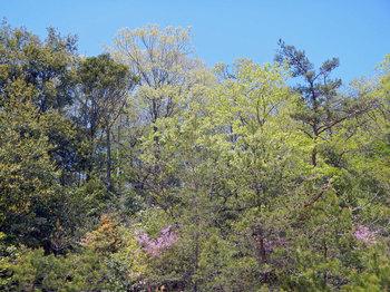 木々の緑.jpg