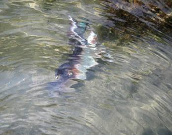 水中の生物か.jpg