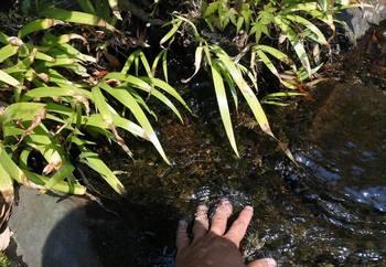水源付近.jpg