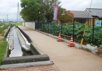 池の脇の水路.jpg