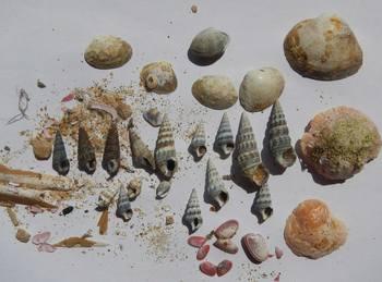 河口の貝.jpg