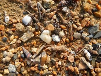 浜の貝.jpg
