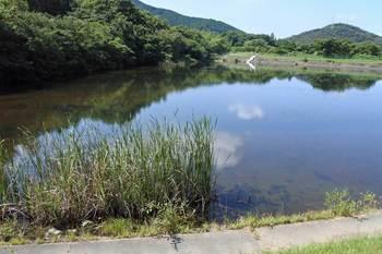 湿原下流のため池.jpg