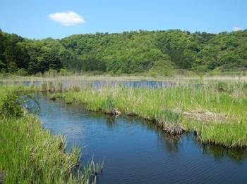 湿地の池.jpg