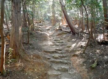 表登山道.jpg