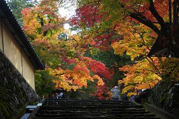 西明寺の紅葉.jpg