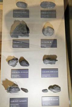 貝の化石.jpg