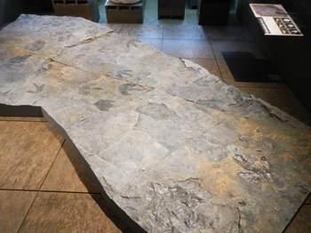 足跡化石.jpg