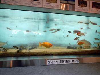 雑魚.jpg
