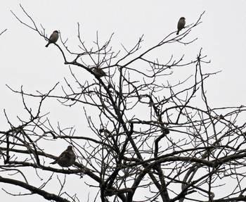 鳥止まる木.jpg